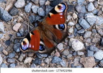 Schmetterling in Kies in Sonne