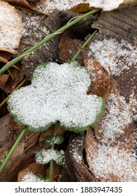 Schnee, Blatt , Winter, Kalt, Wald  - Shutterstock ID 1883947435
