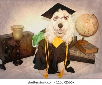 Scholarly Dog Dressed in Graduation Cap and Gown Vintage Still Life Background