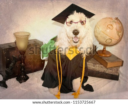 Scholarly Dog Dressed Graduation Cap Gown Stock Photo Edit Now