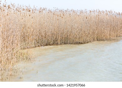 SCHONDORF, BAVARIA / GERMANY - May 1, 2019: Reed at the shoreline of lake Ammersee. Gentle waves, calm and peaceful atmosphere.