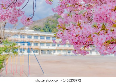 School building and cherry blossoms (spring image)
