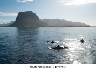 a school of dolphins playing in the clear water of the Indian Ocean in the picturesque backdrop of mountains and sunrise