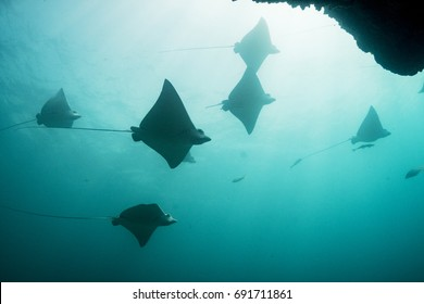 A school of eagle rays silhouetted against the Bahamian sun.