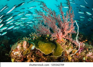 A school of fish and coral