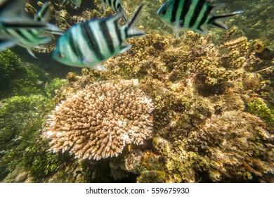 School of fish and coral reef in Watamu National Park, Kenya