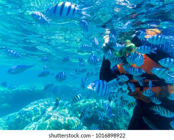 School of fish and diver