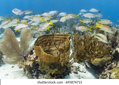 A school of fish over sponges on a beautiful coral reef in The Bahamas