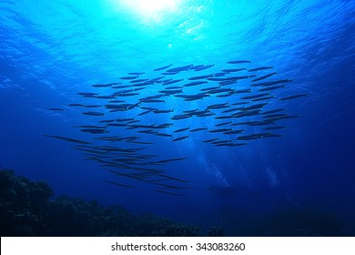 school of fish in the sea Underwater