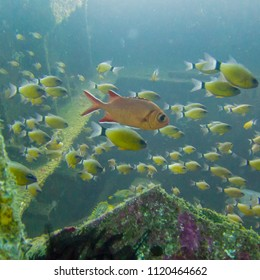 School of Fish at Sunken Boat