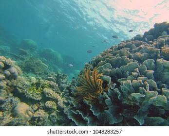 School of fish swimming above the great barrier reef on the Great Barrier Reef, off the coast of Port Douglas, Australia