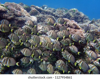 A school of fish in the tropics.
