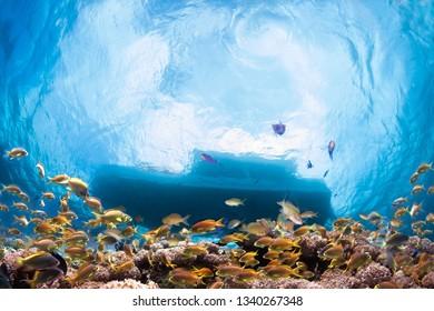 School of fish under dive boat.