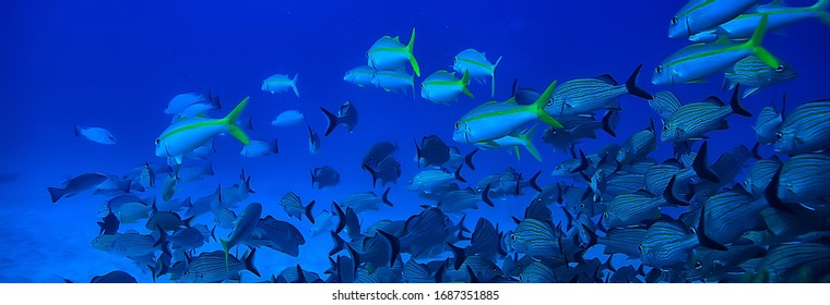 school of fish underwater photo, Gulf of Mexico, Cancun, bio fishing resources