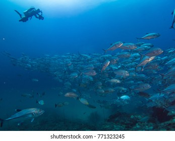 school of fishes with blue water background