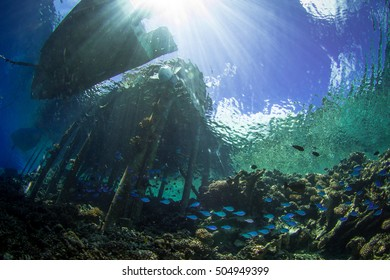 School of fishes. Scenery underneath the jetty. South Fakarava, French Polynesia
