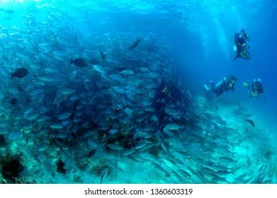 school of fishes in sipadan