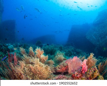 School of Giant trevally in a coral reef (Koh Tachai Plateau, Similan National Park, Thailand)