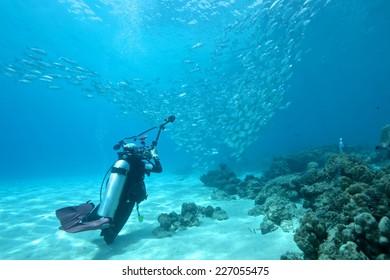 School of jack fish and diver in Dimakya island, Palawan.