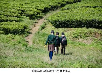 School kids in India walking to school