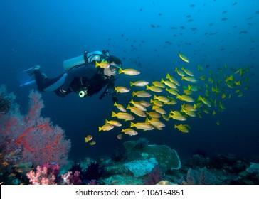 School of snanpper and diver