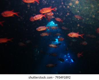 A school of squirrelfish swim through a lava tube.