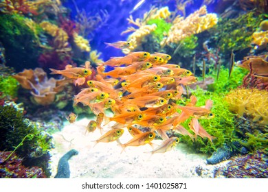 School of tropical fish on coral reef