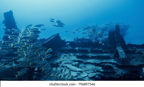 School of Yellowfin Goatfish at the Baby Barge Shipwreck, Oahu, Hawaii