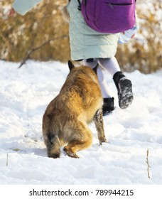 A schoolgirl girl strokes a dog playing in the yard in the winter