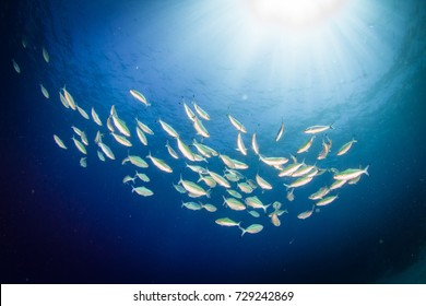 Schooling fish. Wide angle underwater landscape. Underwater view with healthy reef. Dahab, Bannerfish Bay, Egypt. Red Sea.