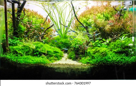 schooling of green neon tetra in planted tank