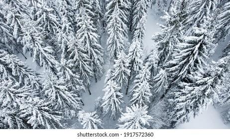 Schwarzwald Wald von oben. Tannen mit Schnee im Winter.  - Shutterstock ID 1917572360