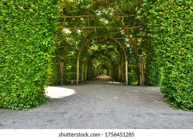 Schwerin, Mecklenburg-Vorpommern / Germany - June 6, 2020: Park garden of Schwerin Castle with a tunnel of plants