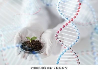 science, biology, ecology, research and people concept - close up of scientist hands holding petri dish with plant sample in bio laboratory and dna molecule structure