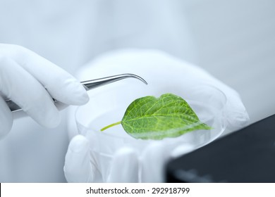science, chemistry, biology and people concept - close up of scientist hand with microscope and green leaf making research in clinical laboratory