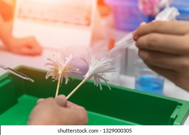Science classroom in school concept. Student drop chemical agent to do experiment on litmus paper for testing pH in Chemistry class.