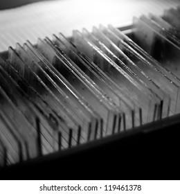 science medical glass microscope slide of animal sample