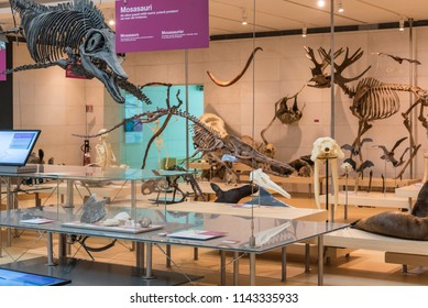 SCIENCE MUSEUM OF TRENTO, Italy, April 19, 2018: expositive interactive spaces of the famous Museum denominate MUSE. Renzo Piano architect building Workshop. taxidermy animals
