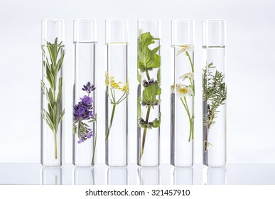 Scientific Experiment - Flowers and plants in test tubes