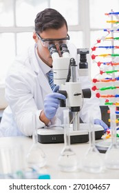 Scientist analysing petri dish with the microscope in the laboratory
