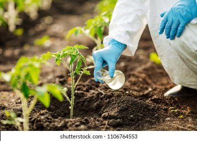 Scientist assessing the quality of the soil. The concept of soil quality and farming
