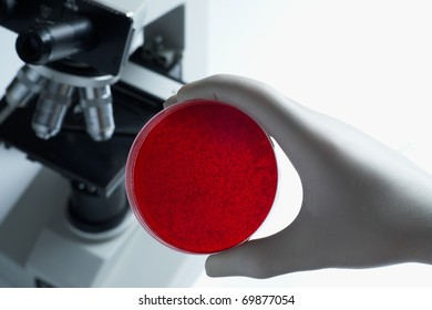 Scientist with blood cell culture dish and microscope in laboratory selective focus