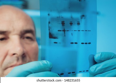 Scientist checks results of Western Blot experiment