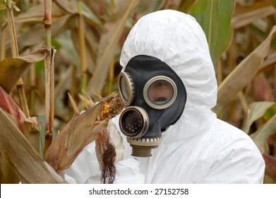 Scientist in the corn field