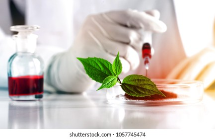 Scientist do biochemistry analysis