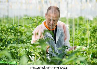 Scientist Examining Plants In Greenhouse