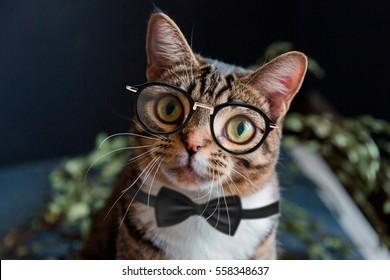 Scientist gentleman cat with glasses