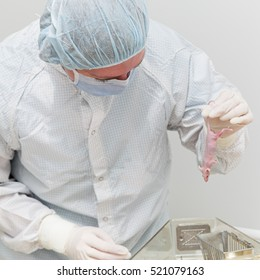 Scientist holding laboratory mouse in hands