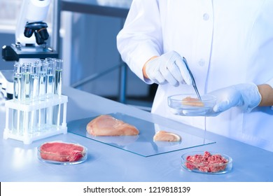 Scientist holding Petri dish with meat sample over table in laboratory