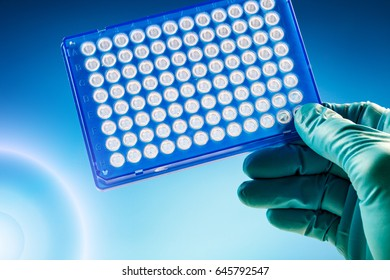 Scientist in laboratory holding a 96 well plate for PCR analysis and research in the microbiological lab Samples microplate